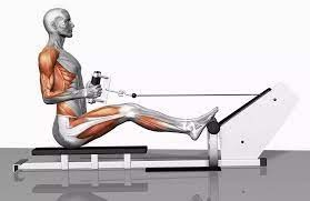 Benefits of the seated row exercise