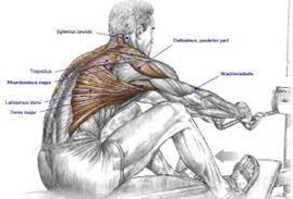 How to do the seated row properly