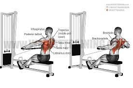 Muscles Worked during seated row without machine